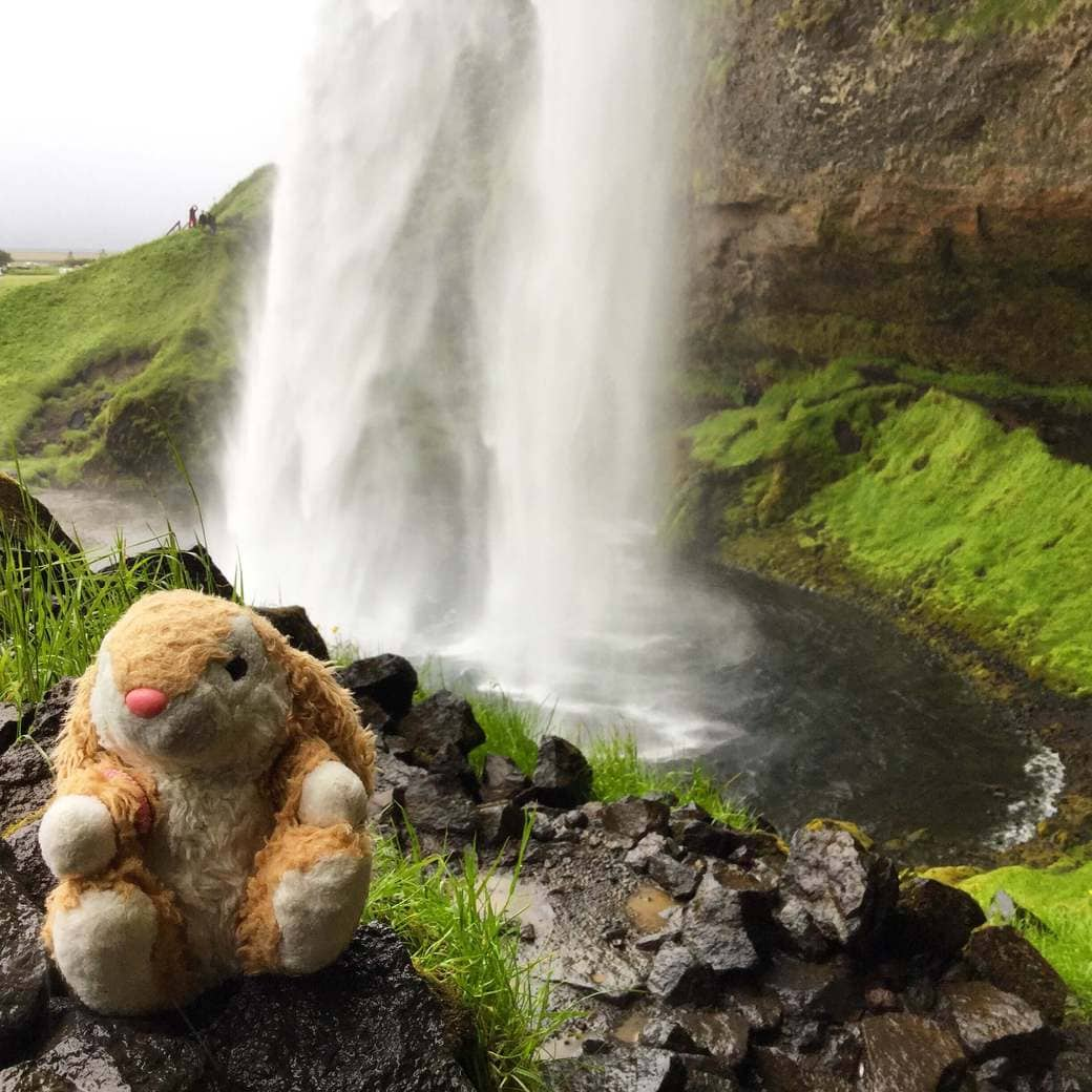 Image of Bunny at Seljalandsfoss waterfalls