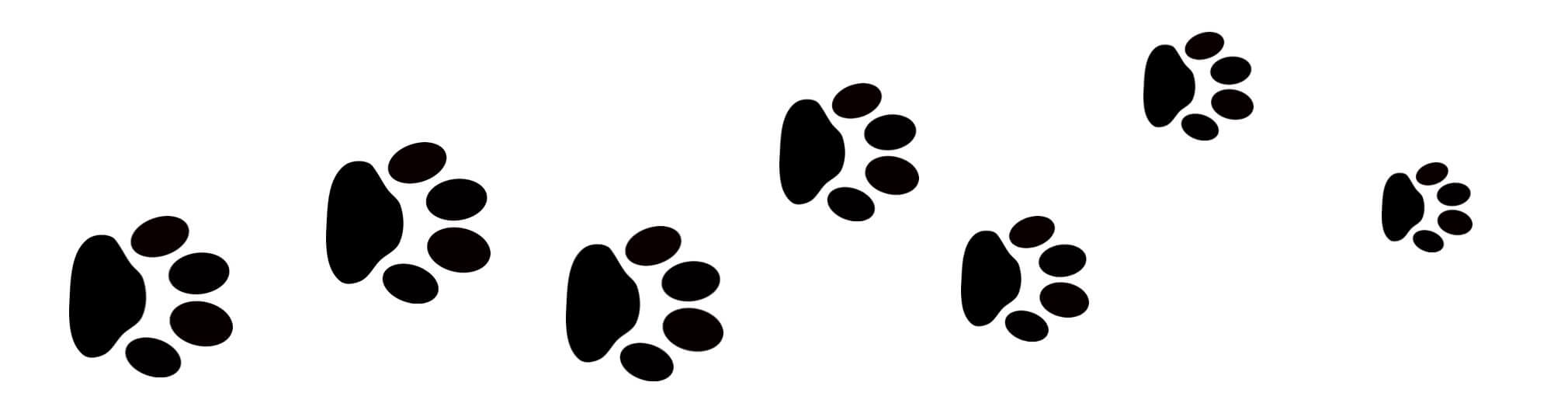 Image of Bunny paw prints