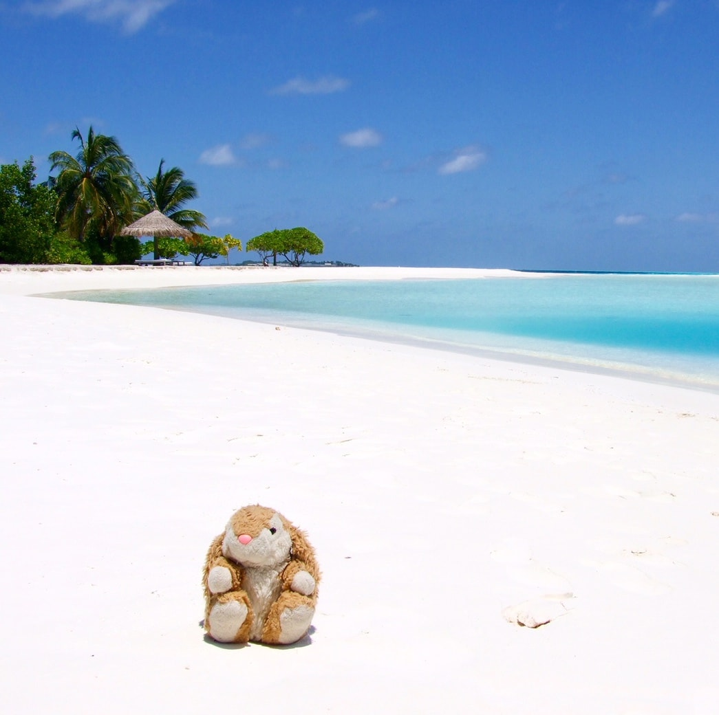 Image of Bunny in the Maldives