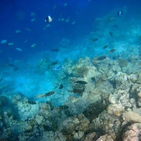 Image of house reef