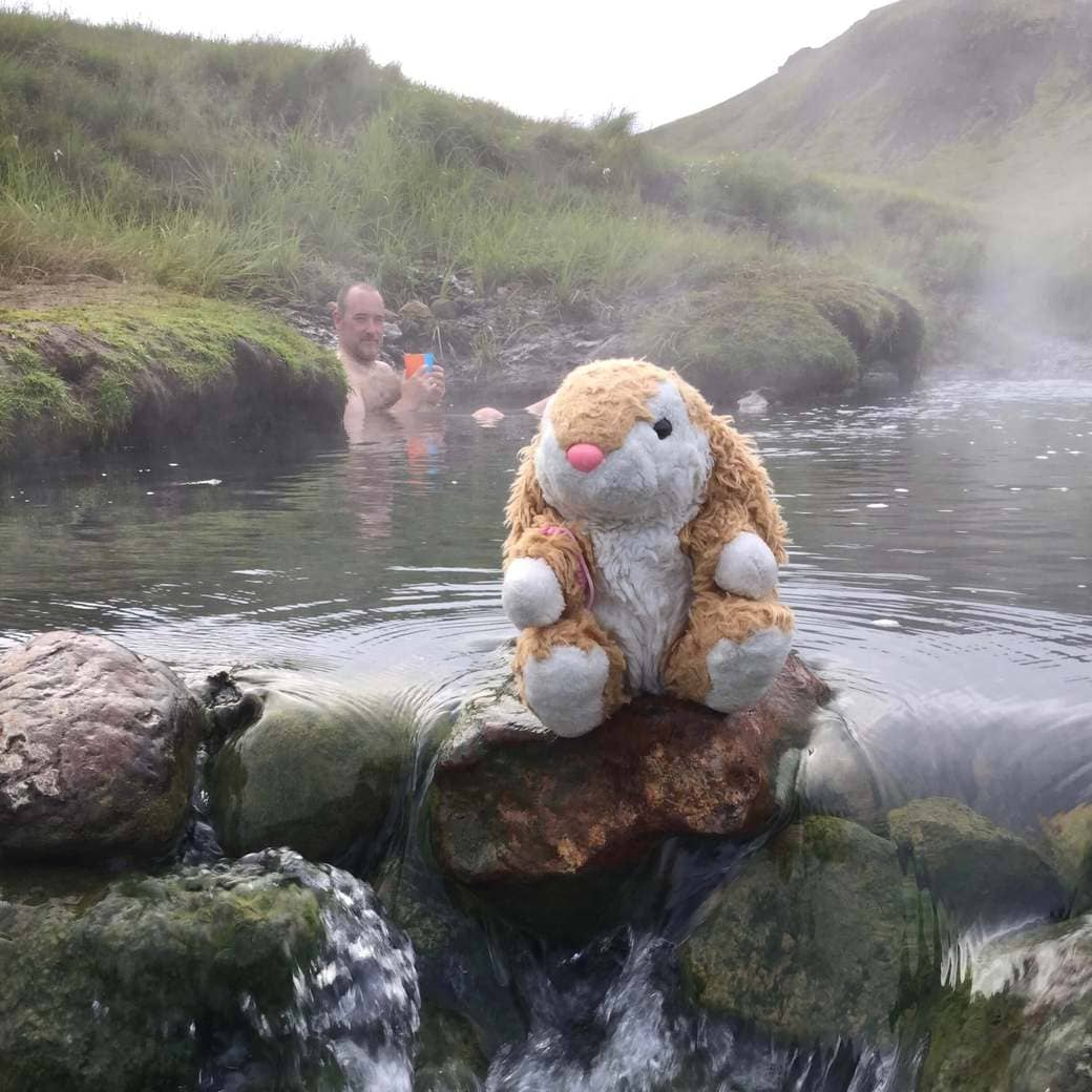 Image of Bunny bathing in hot river