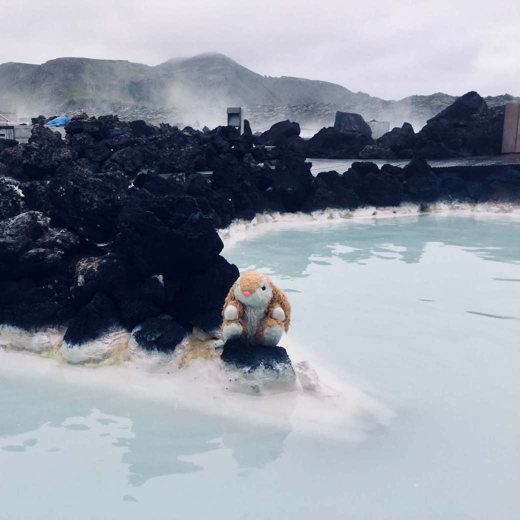 Image of Bunny at the Blue Lagoon