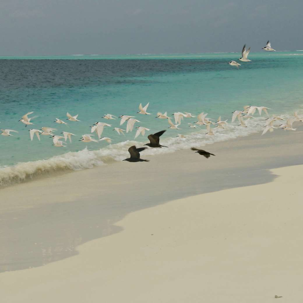 Image of sandbank