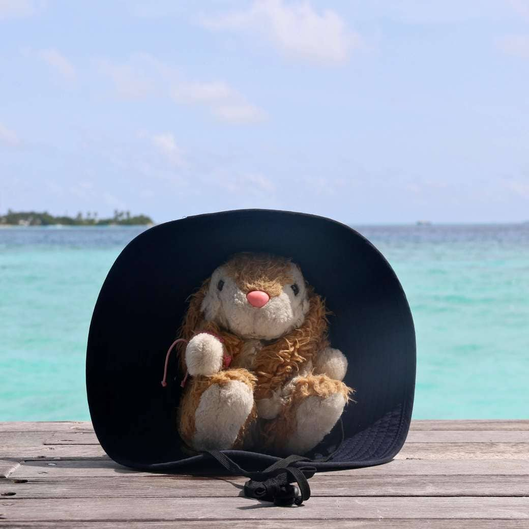 Image of Bunny at Cocoa Island