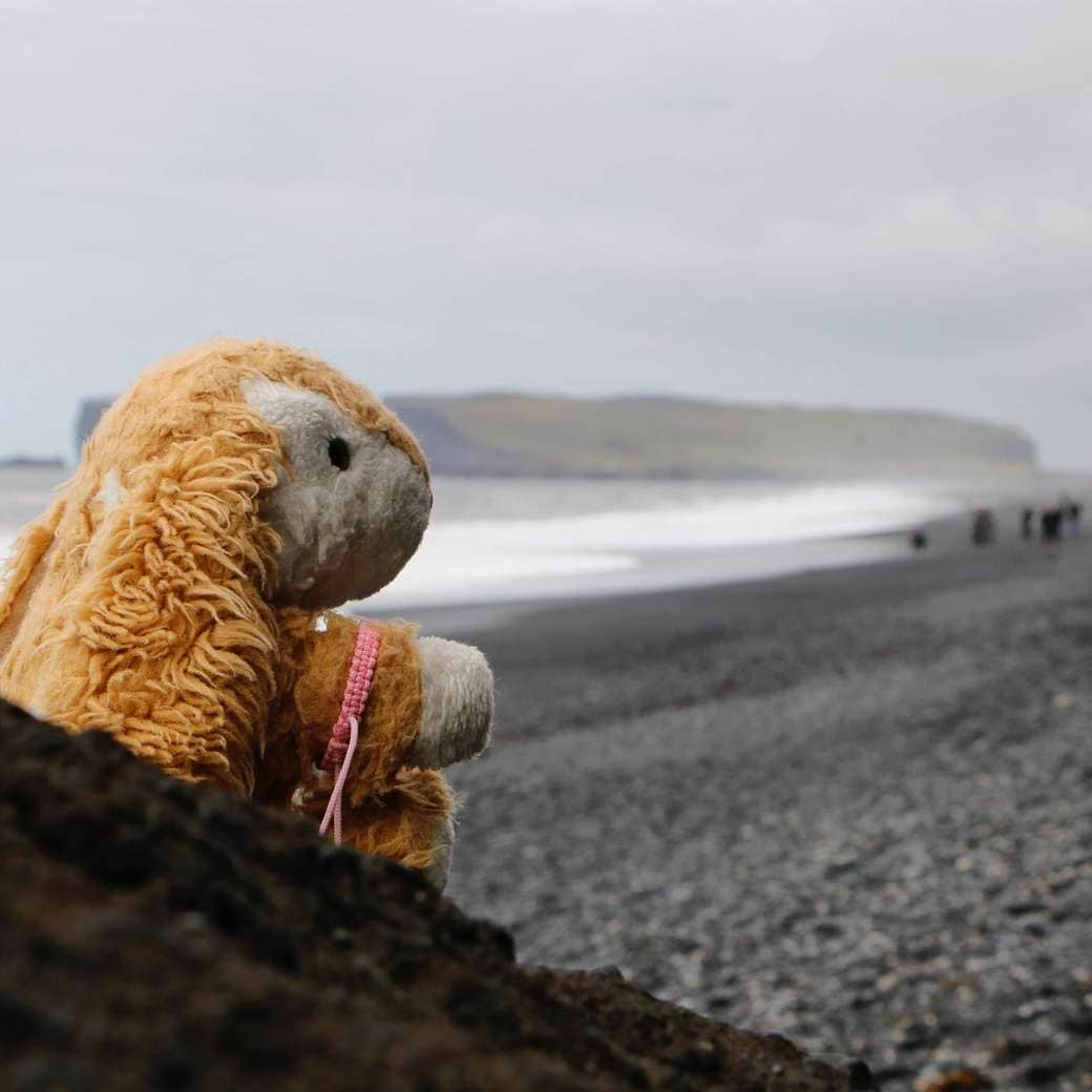 Image of Bunny at Reynisfjara beach