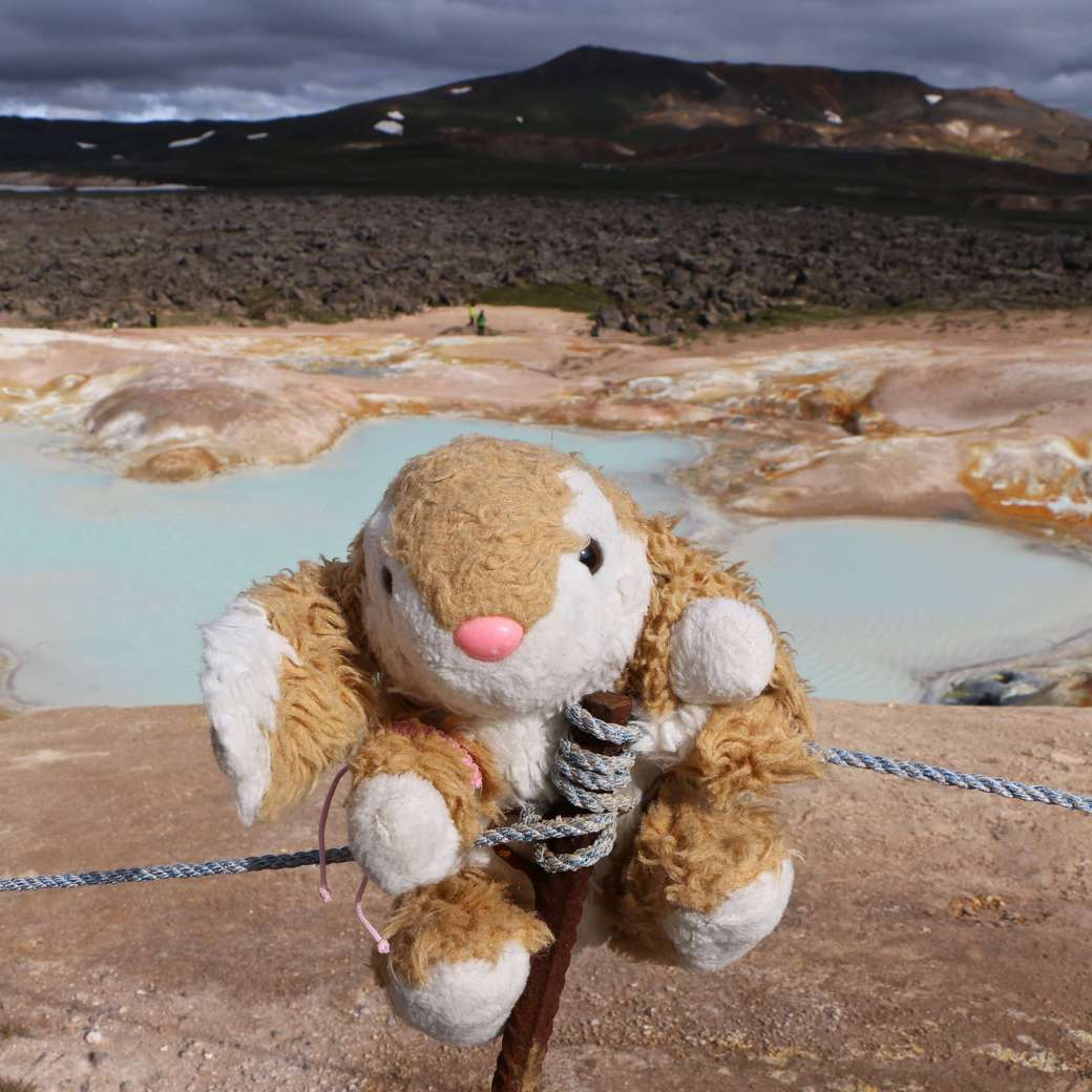 Image of Bunny at an acid lake