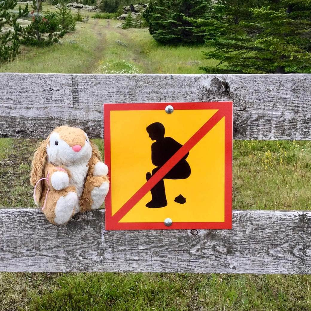 Image of Bunny's favourite traffic sign