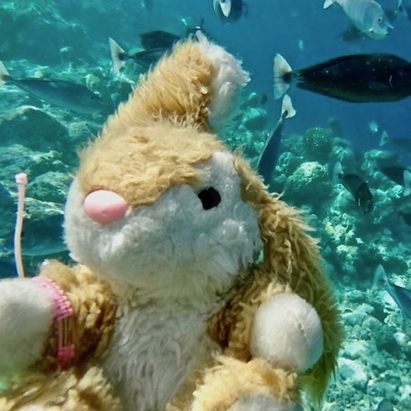 Image of Bunny snorkelling