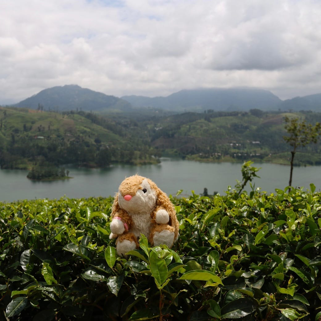Image of Sri Lanka tea trails