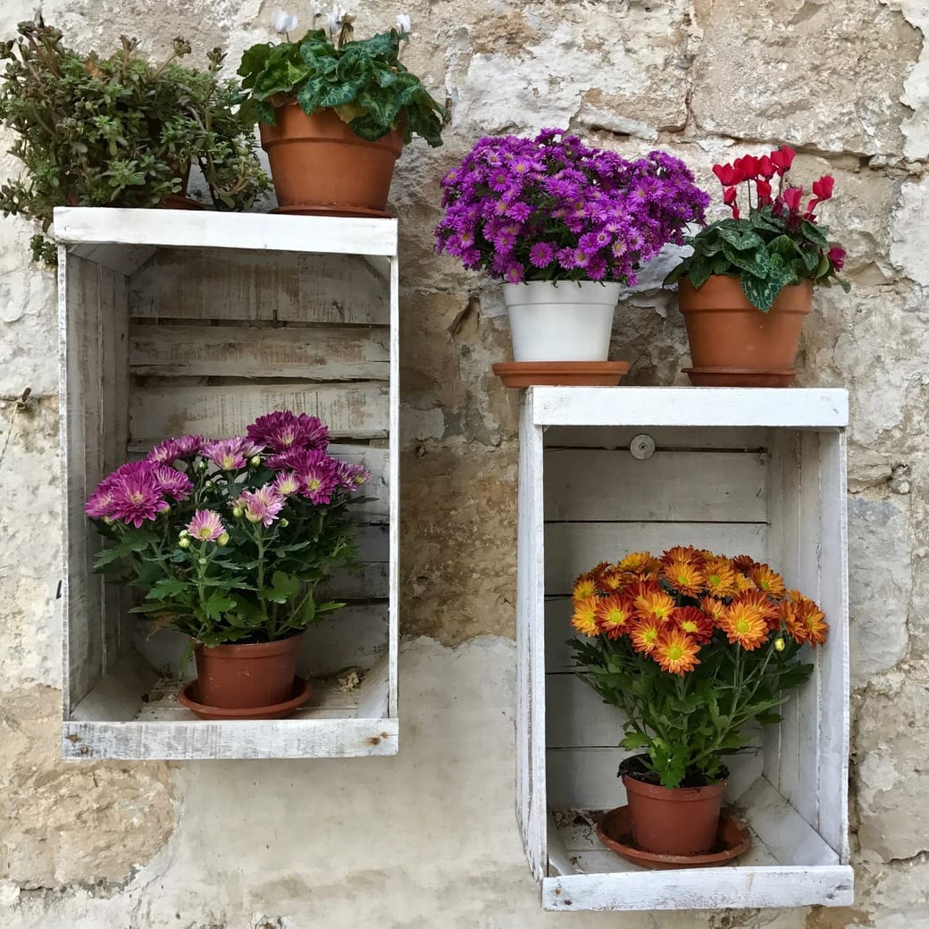 Image of Polignano flowers