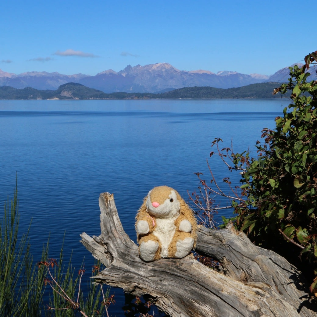 Image of Bunny by Lake Nahuel Huapi