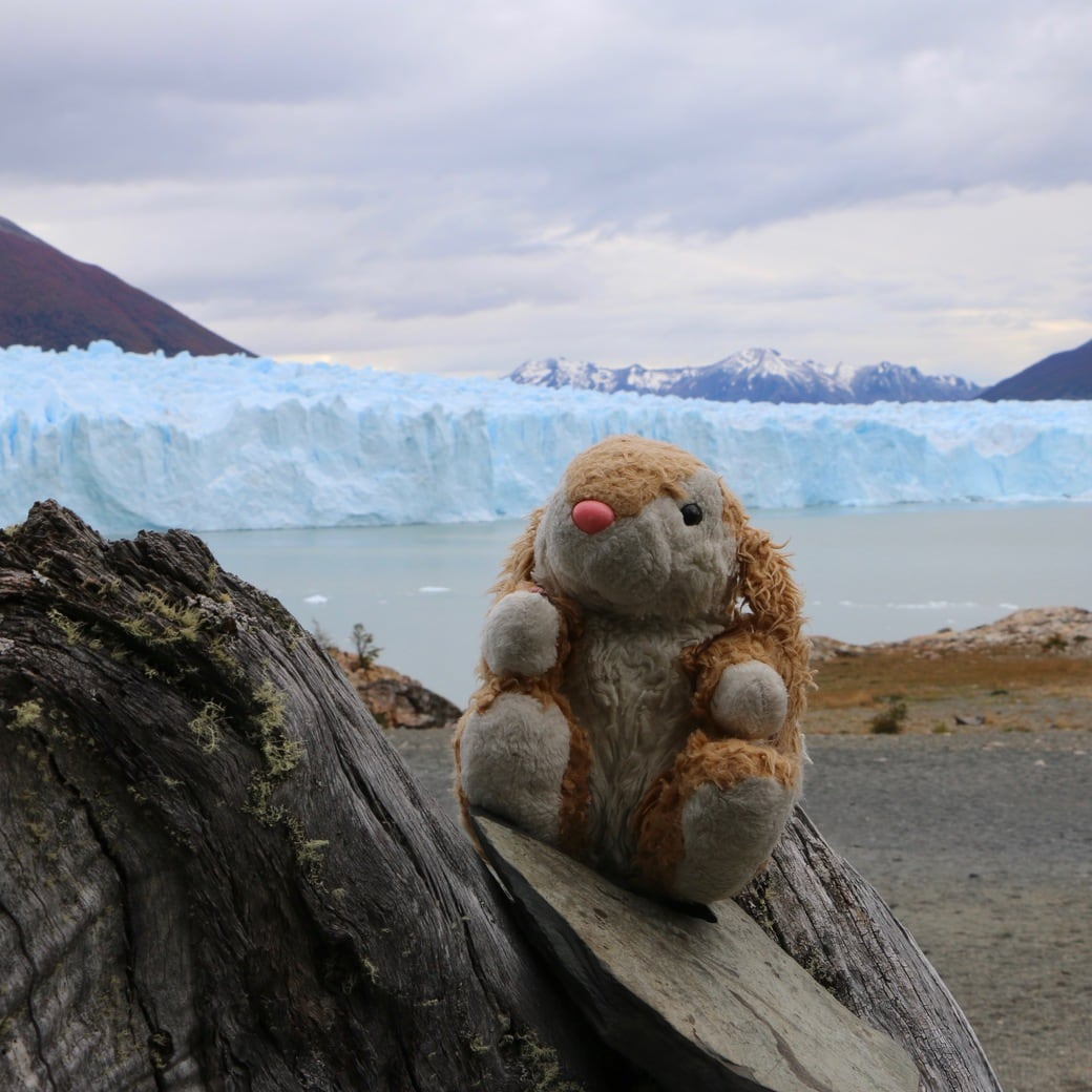 Image of Bunny at Perito Moreno