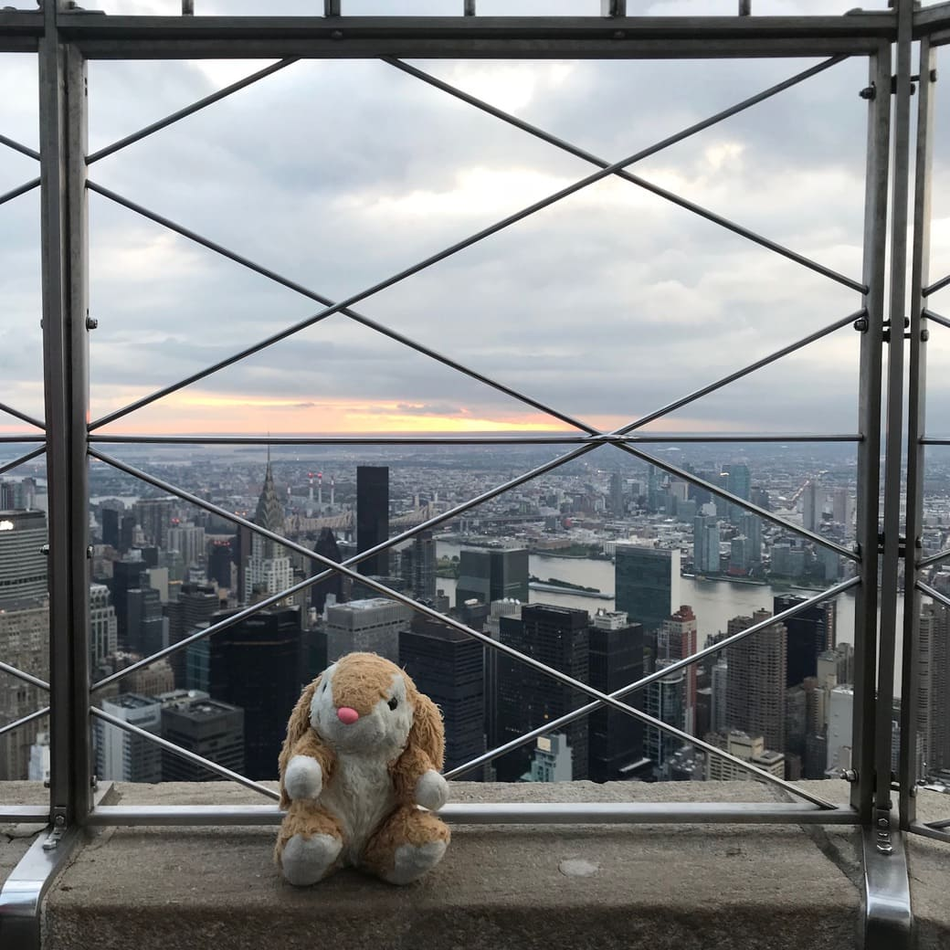 Image of Bunny on the observation deck