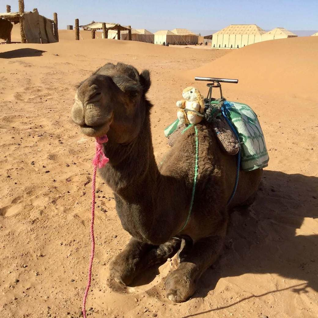 Image of Bunny on a camel