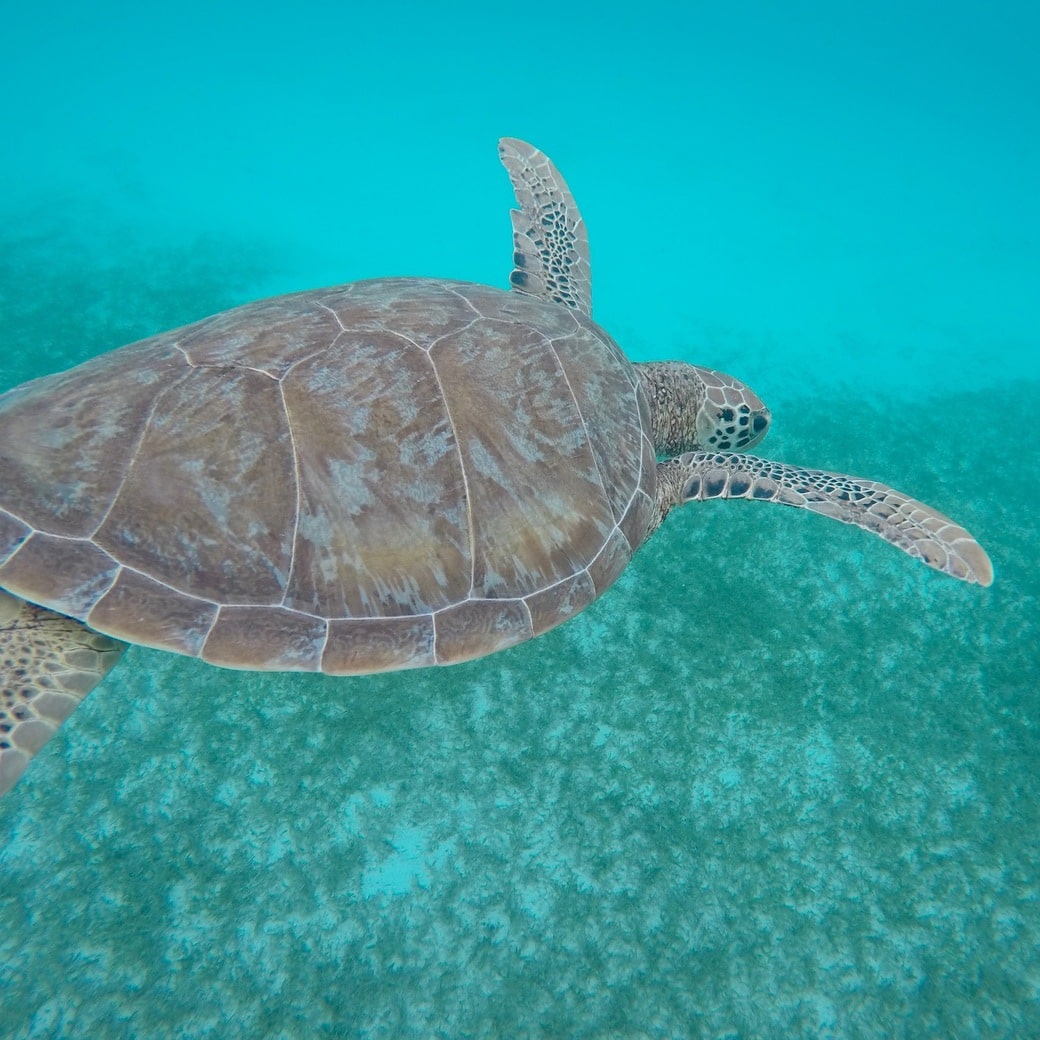 Image of turtle