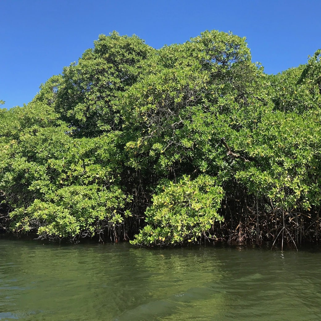 Image of mangrove forest