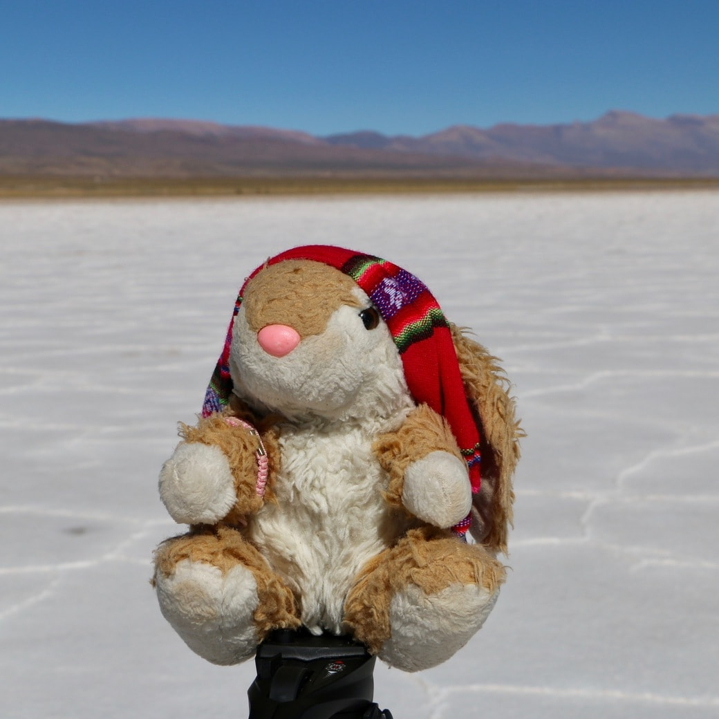Image of Bunny at Salinas Grandes