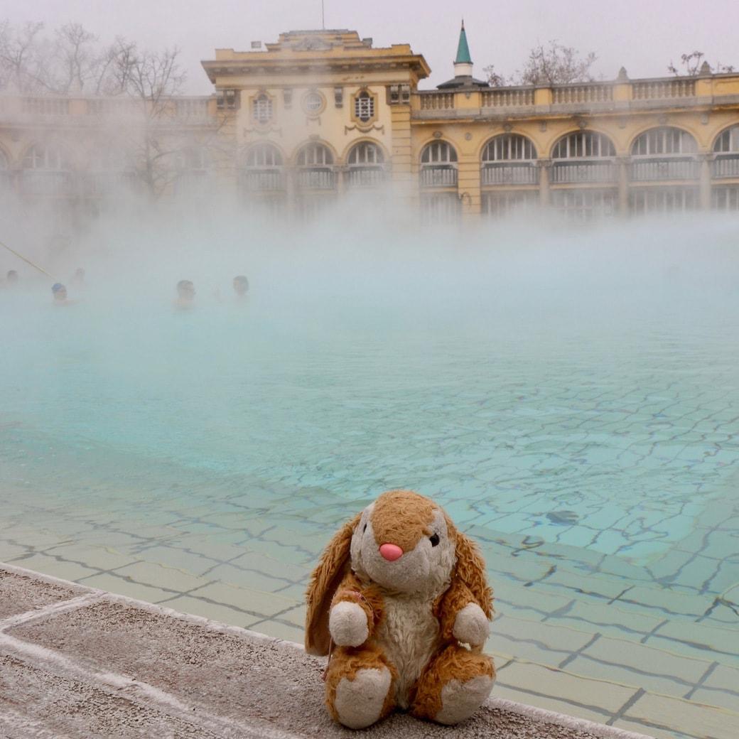 Bunny at thermal baths