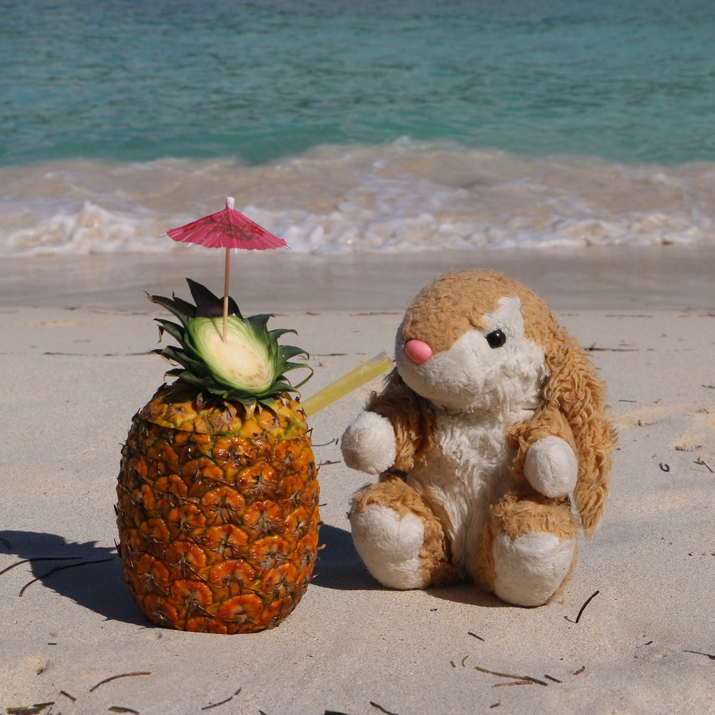 Image of Bunny on the beach