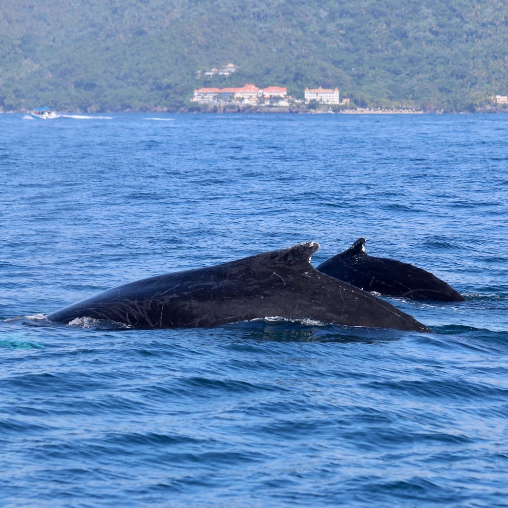 Image of pair of whales
