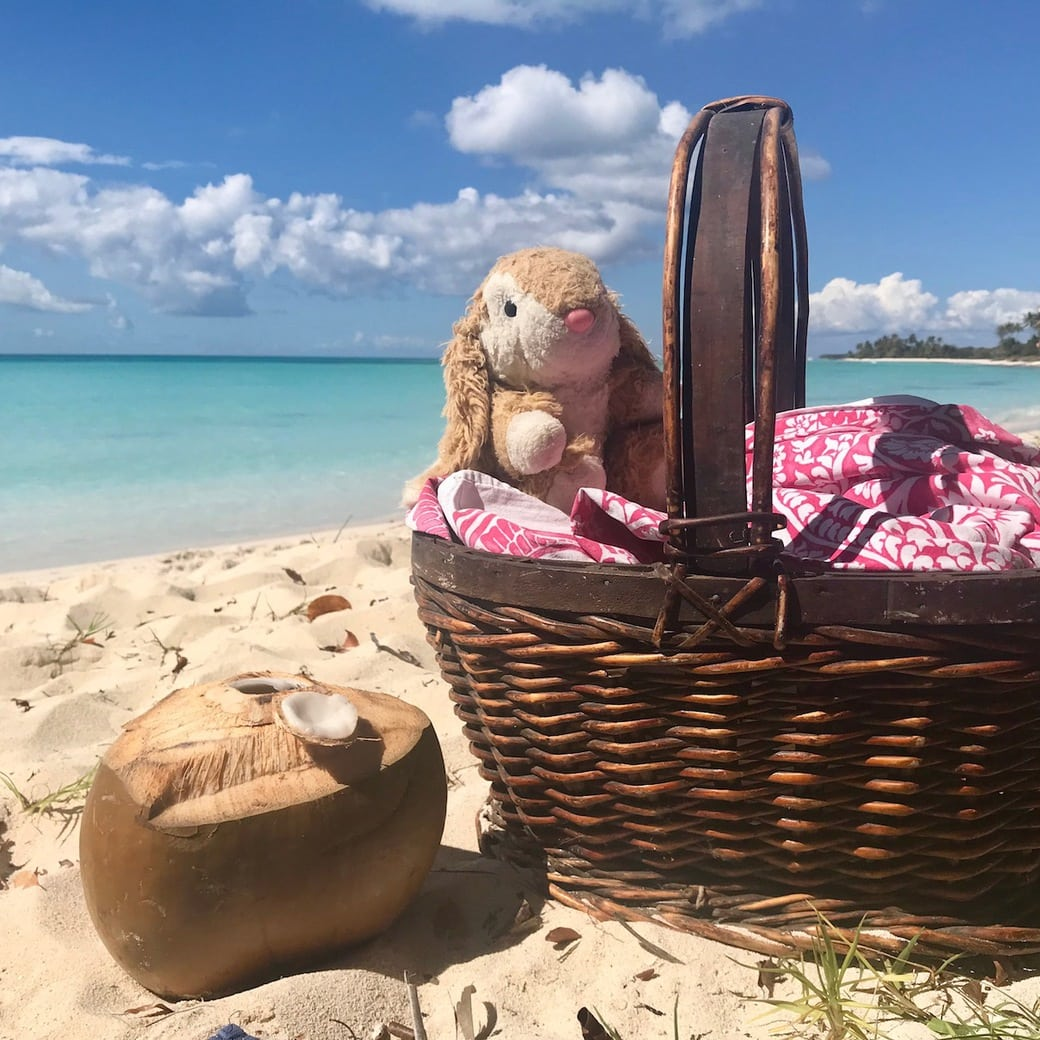 Image of Bunny and a picnic basket