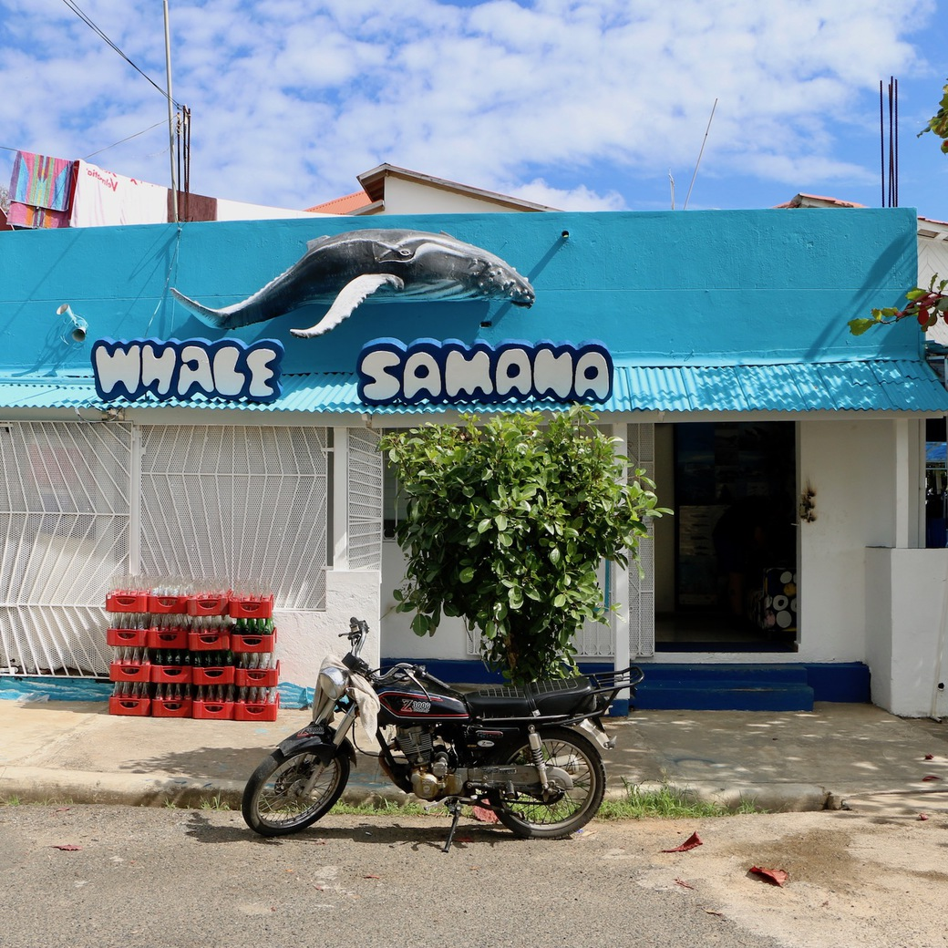 Image of Whale Samana office