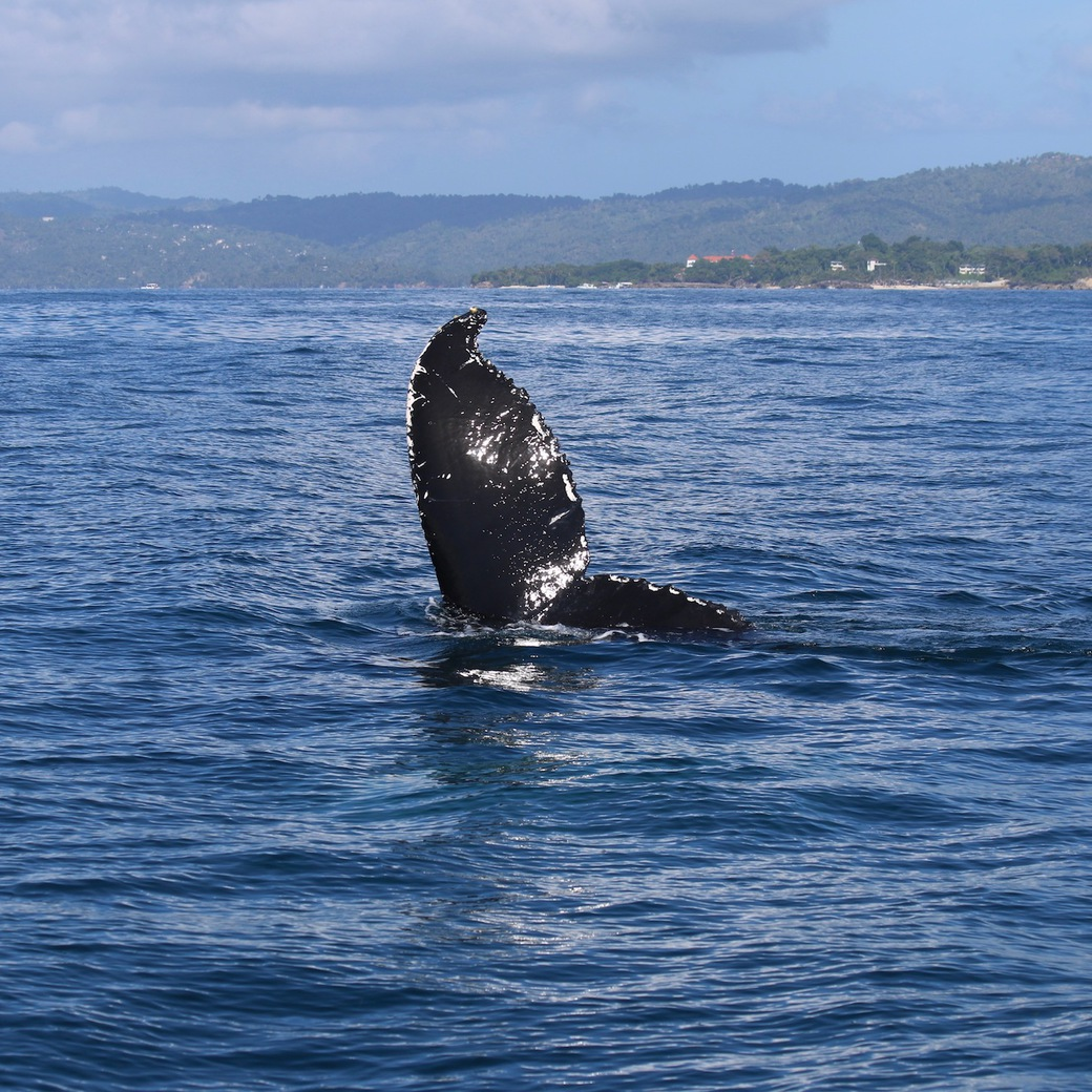 Image of whale tail