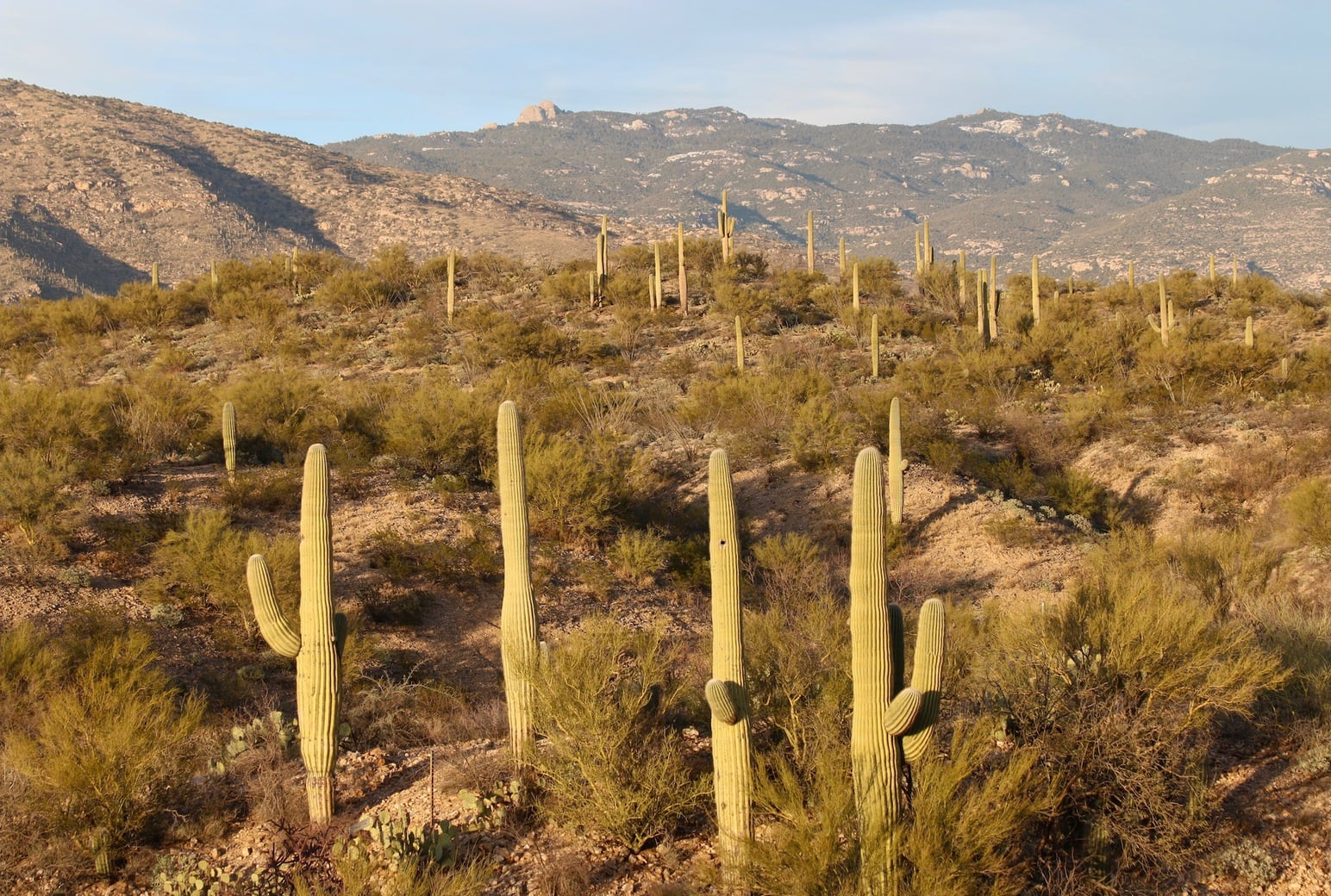 Image of Saguaro National Park