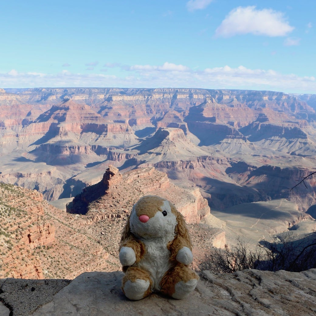 Image of Bunny at the canyon