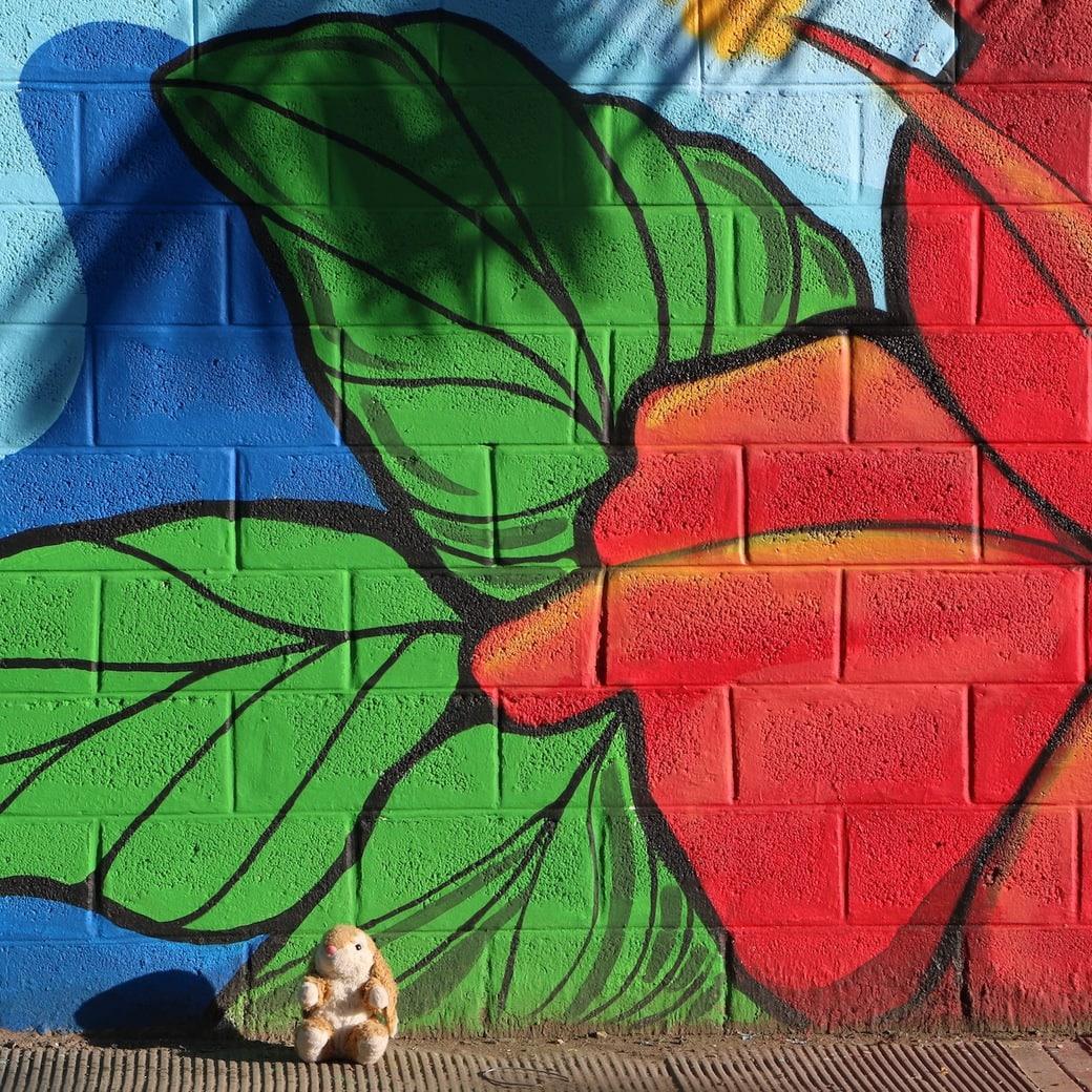 Image of Bunny in Las Terrenas