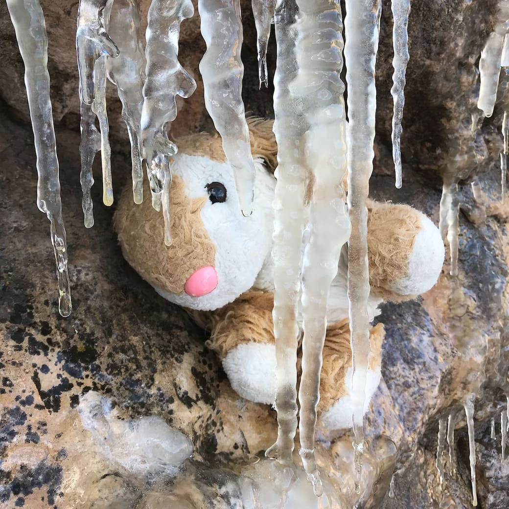 Image of Bunny with icicles