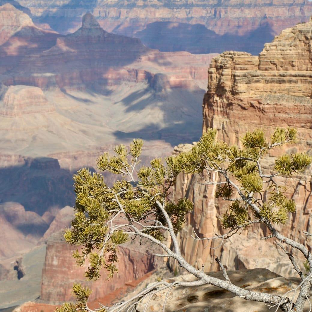 Image of Grand Canyon Rim view