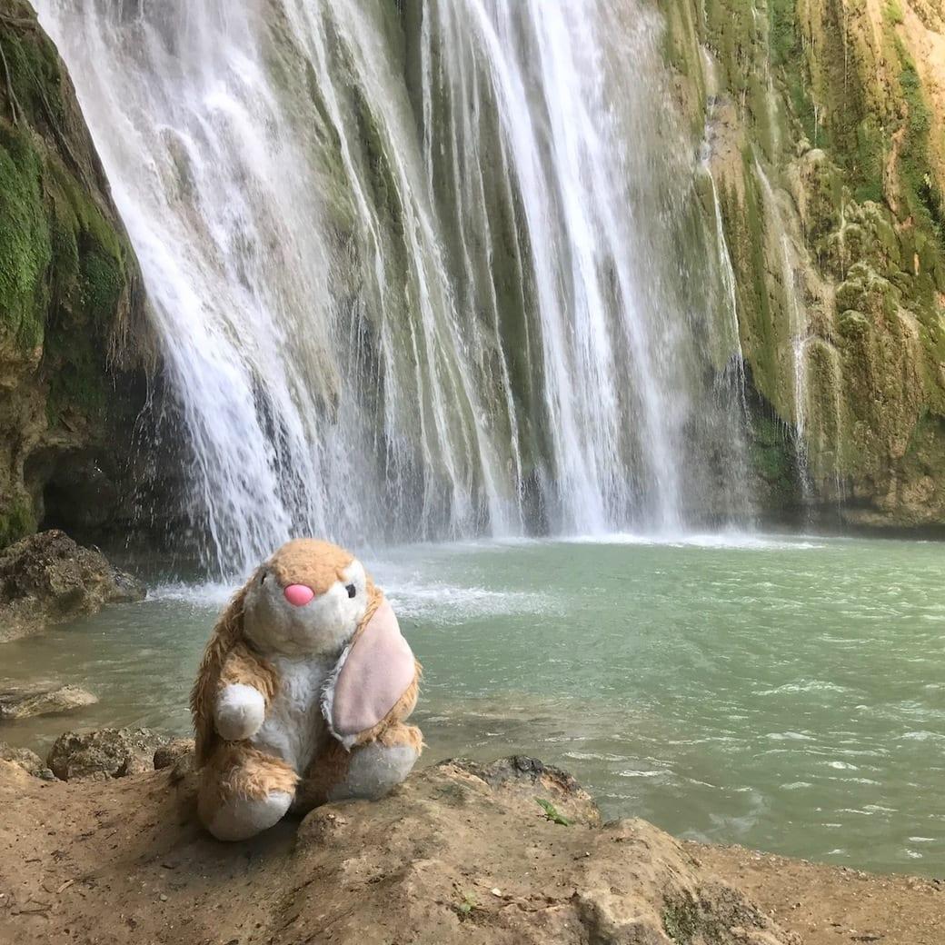 Image of Bunny at waterfalls