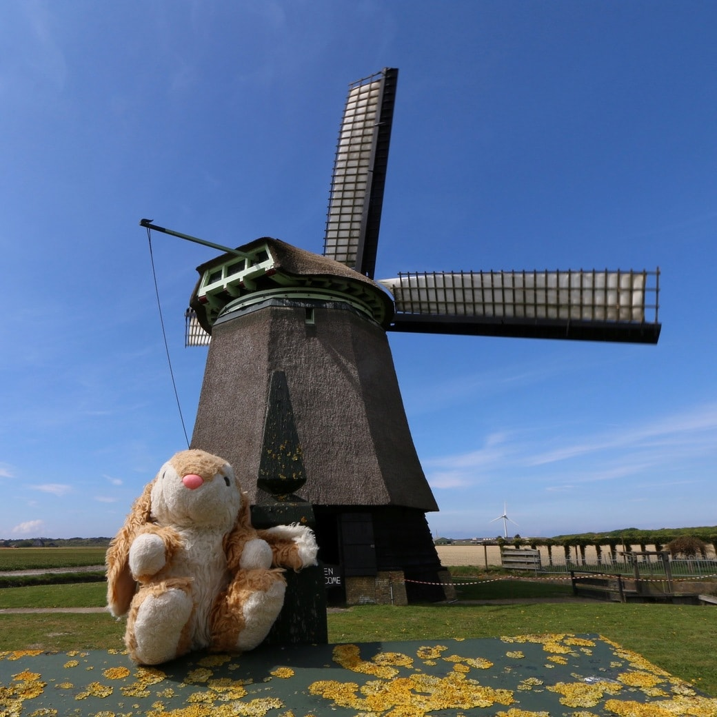 Image of windmill and Bunny