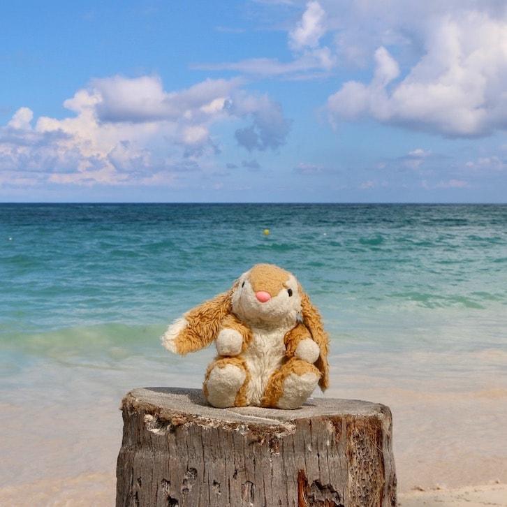 Bunny posing on Playa Bavaro