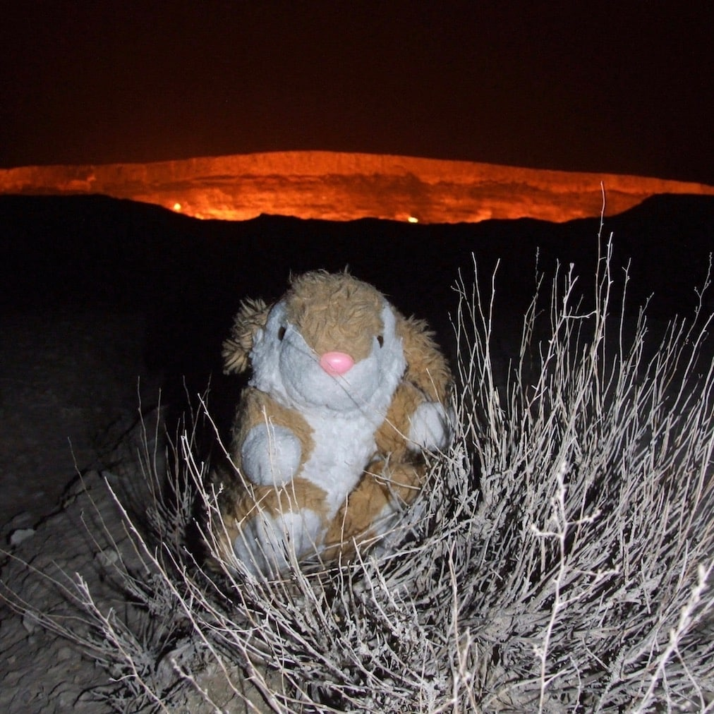 Bunny posing at the gas crater