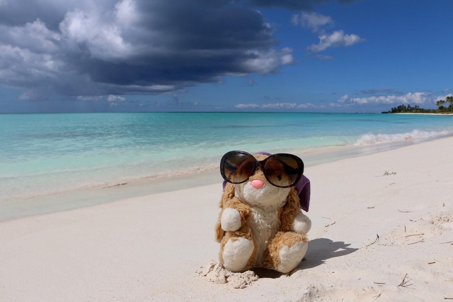 Bunny on the beach on Isla Saona