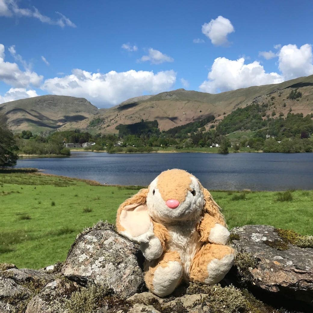 Bunny posing in Lake District