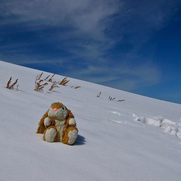 Bunny hiking in snow