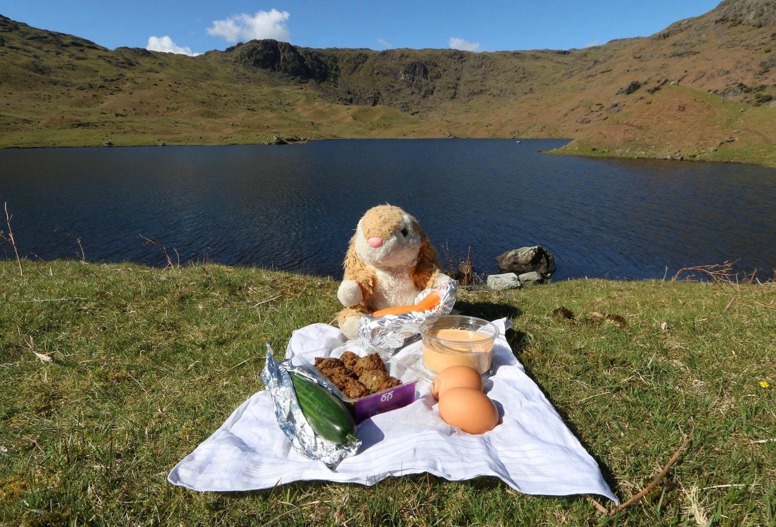 Bunny's picnic in Lake District