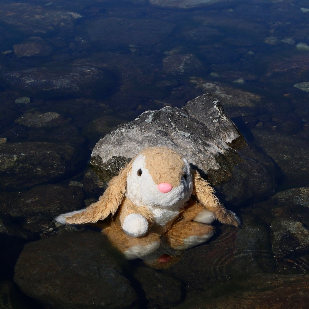 Bunny swimming in Lake District