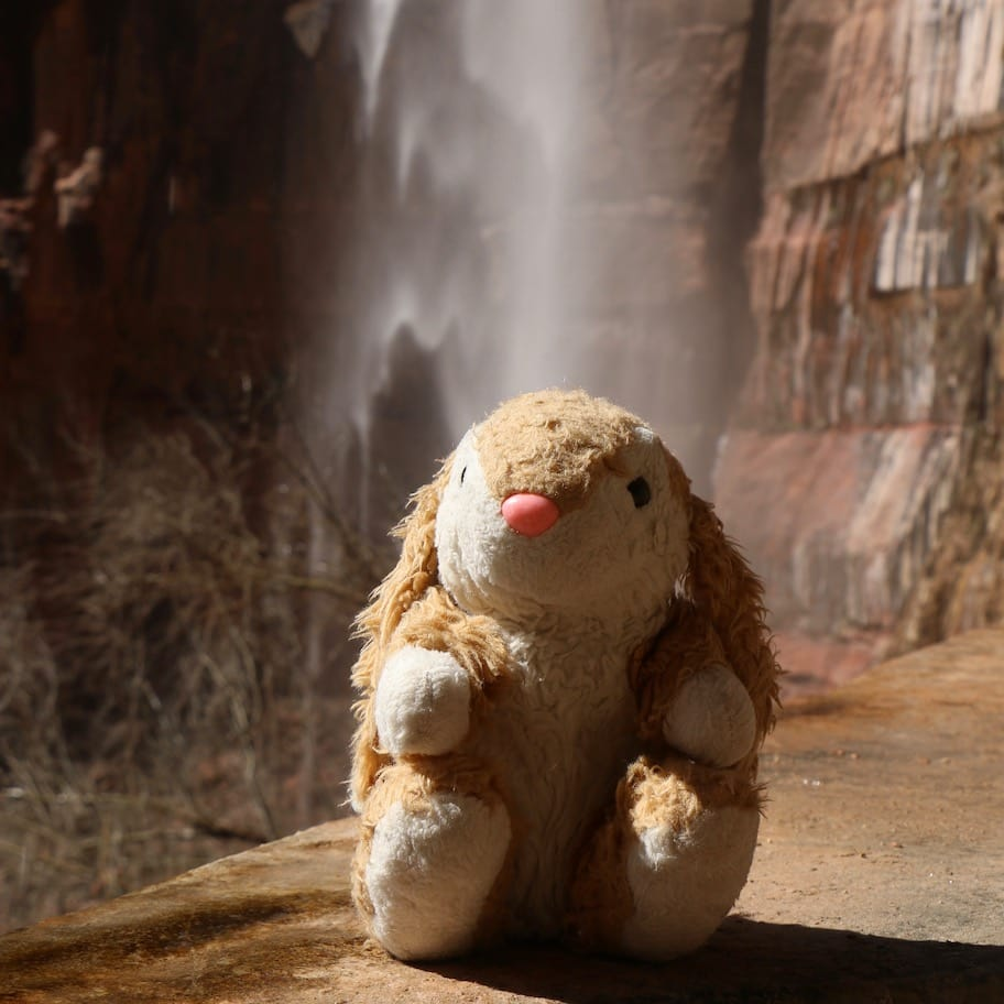 Bunny at Weeping Rock in Zion NP