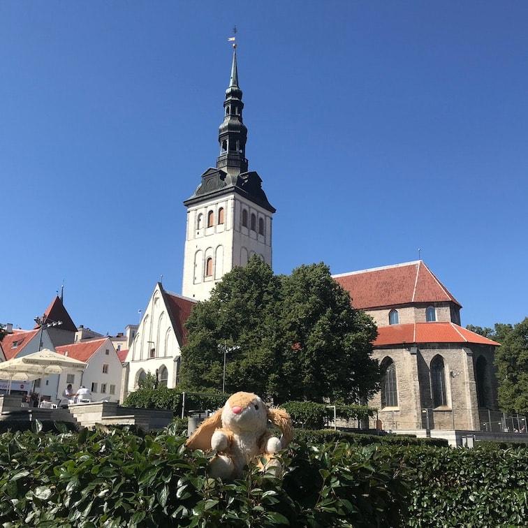 Bunny posing in Tallinn