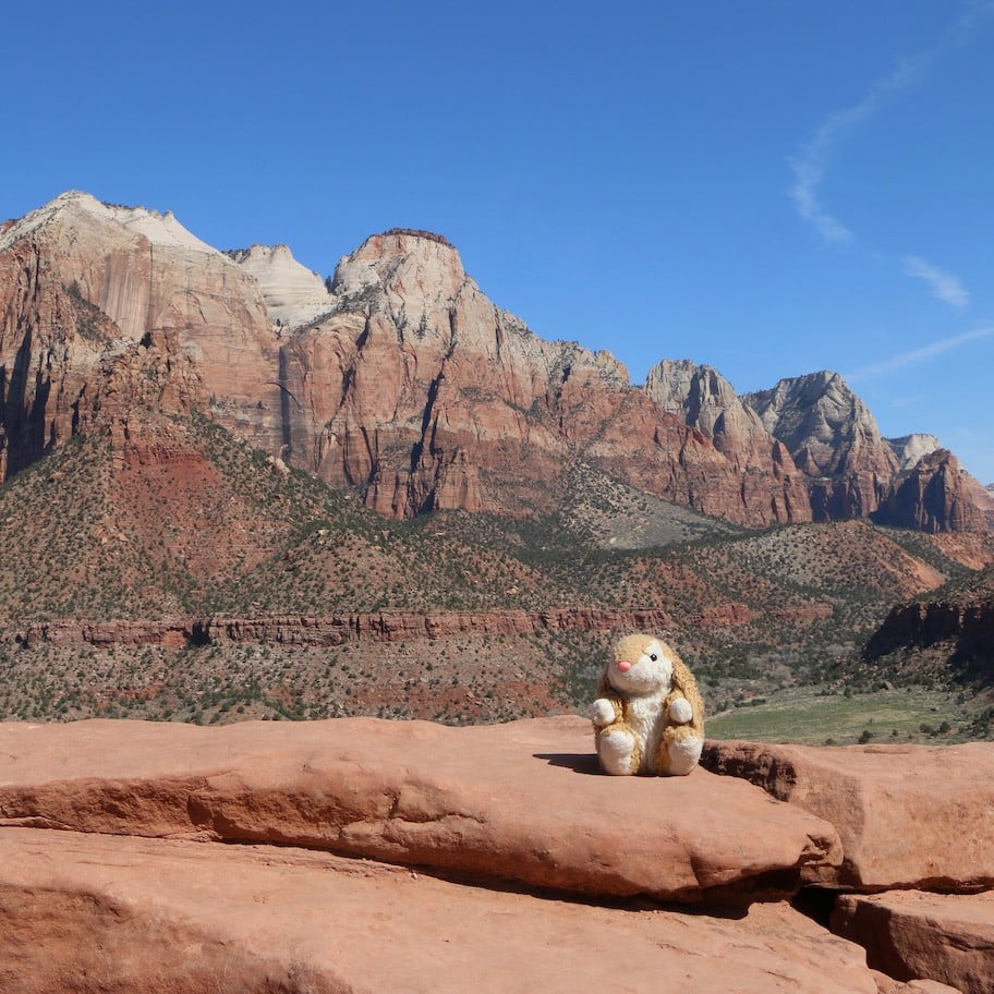 Bunny on a hiking trail in Zion NP