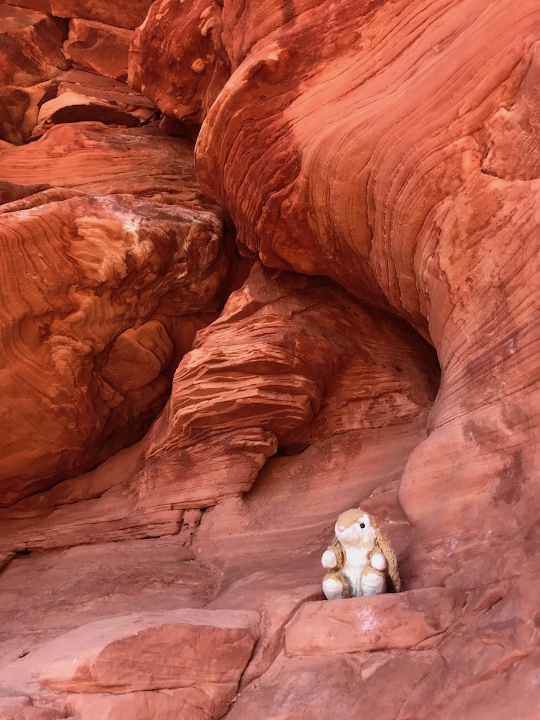 Bunny hiking in Zion