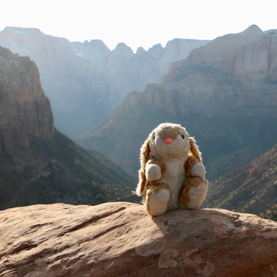 Bunny at Canyon Overlook