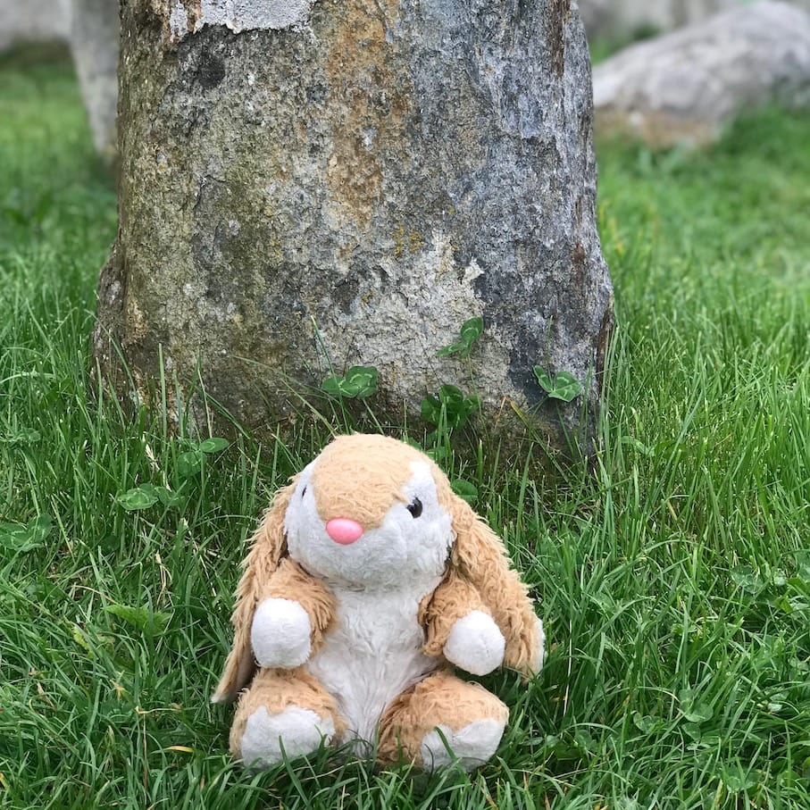 Bunny almost touching the stones