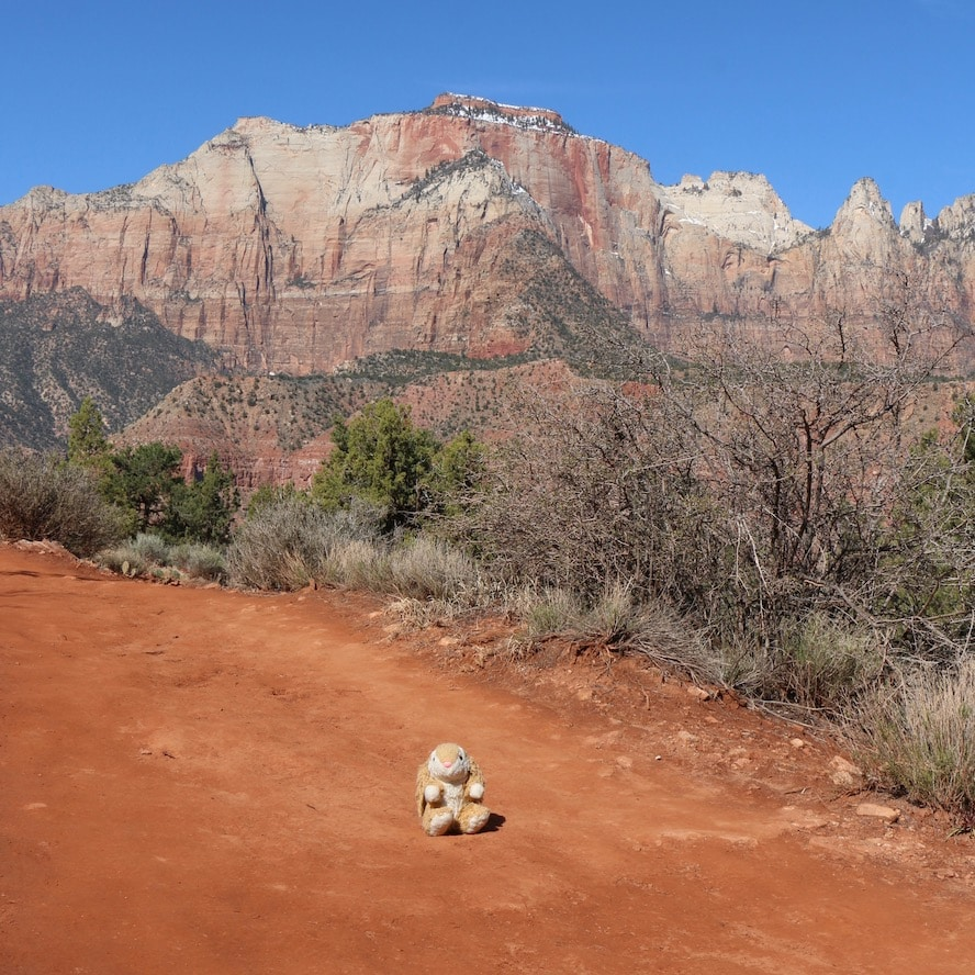 Bunny hiking in Zion National Park