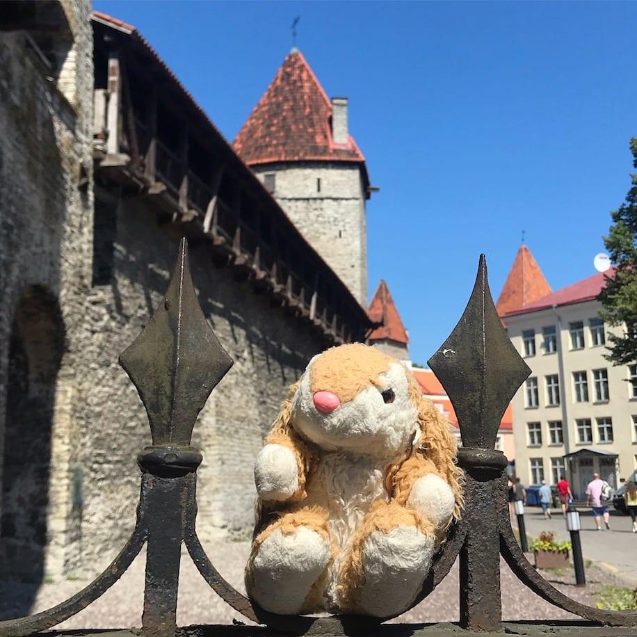 Bunny exploring Tallinn