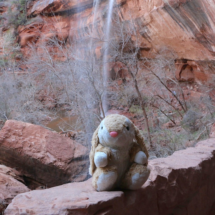 Bunny at Lower Emerald Pool